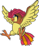 017Pidgeotto Dream